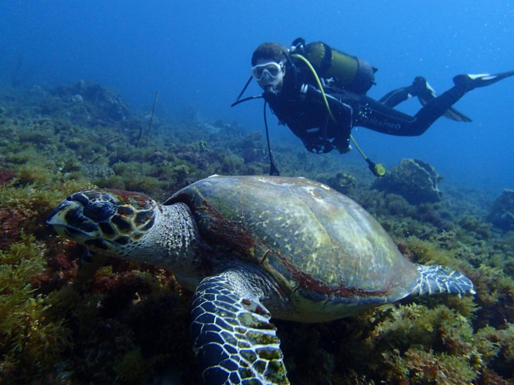 Plongée sous marine - Vacances en Martinique